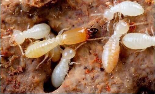 聊城专业防治白蚁